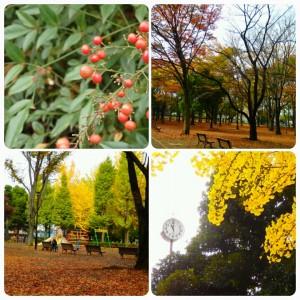 20151118城北中央公園の紅葉